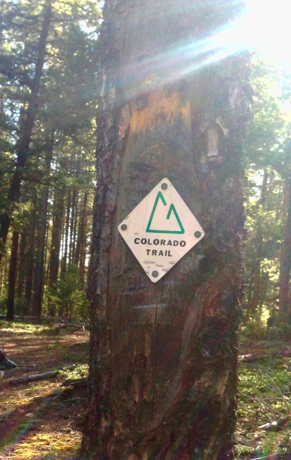 CO Trail tree sign 2