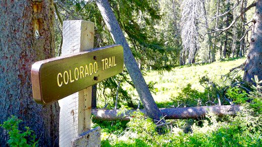 Co trail sign standing forest