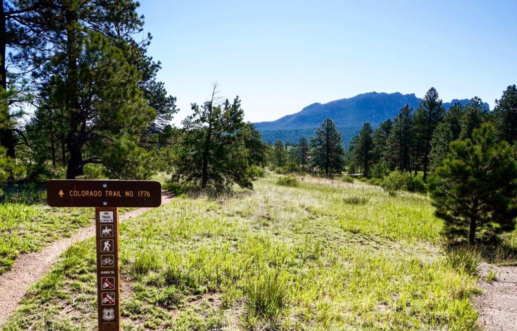 Pine grove field